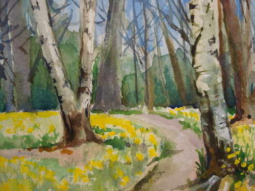 Daffodils, Miss Wilmots, Warley, watercolour by Julia Blencowe