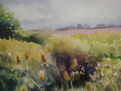 Teasles on the Chelmer, watercolour by Julia Blencowe