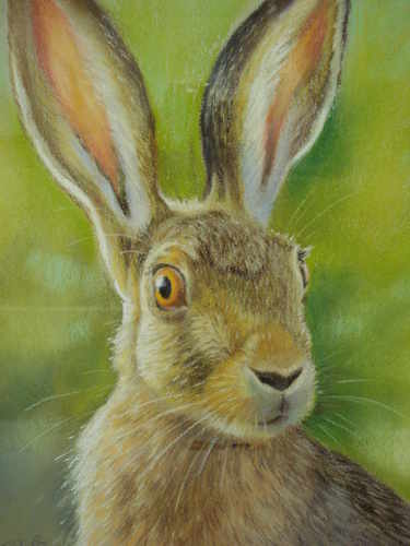 Startled Hare, pastel painting by Mark Blue