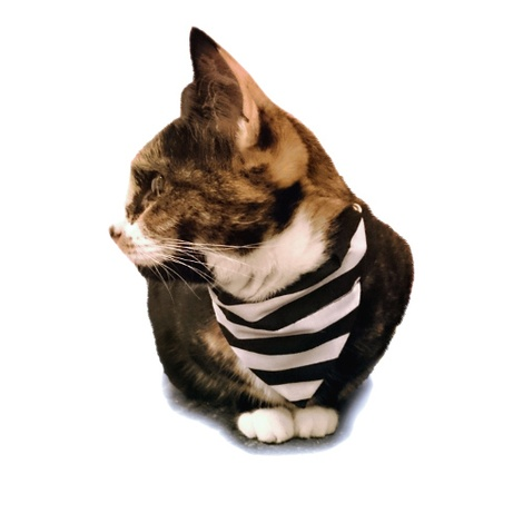 black and white stripe referee football bandana