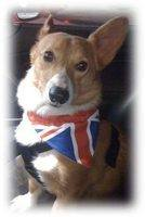Patriotic Dog Bandanas