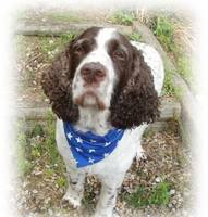 Stars, Stripes And Dotty Dog Bandanas