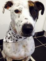 Arthur Crossbreed Rescue Mongrel Dog Bandana