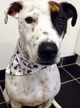 Arthur Crossbreed Rescue Mongrel Dog Bandana