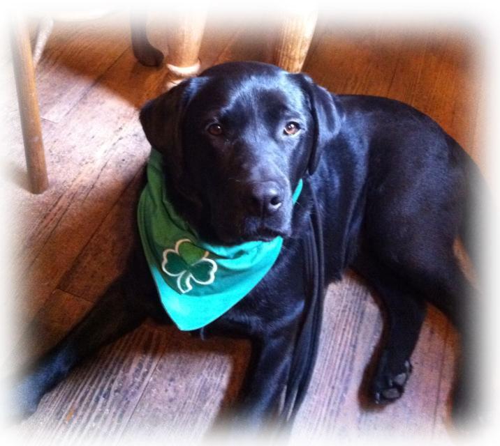 Green Shamrock Irish Dog Bandana
