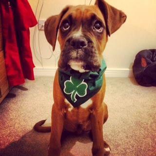 Black Shamrock Irish Dog Bandana St Patricks Day