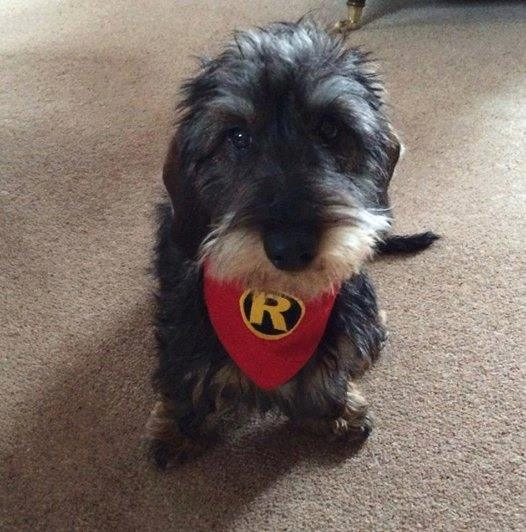 Pawed Crusader Red Robin Sidekick Dog And Cat Bandana