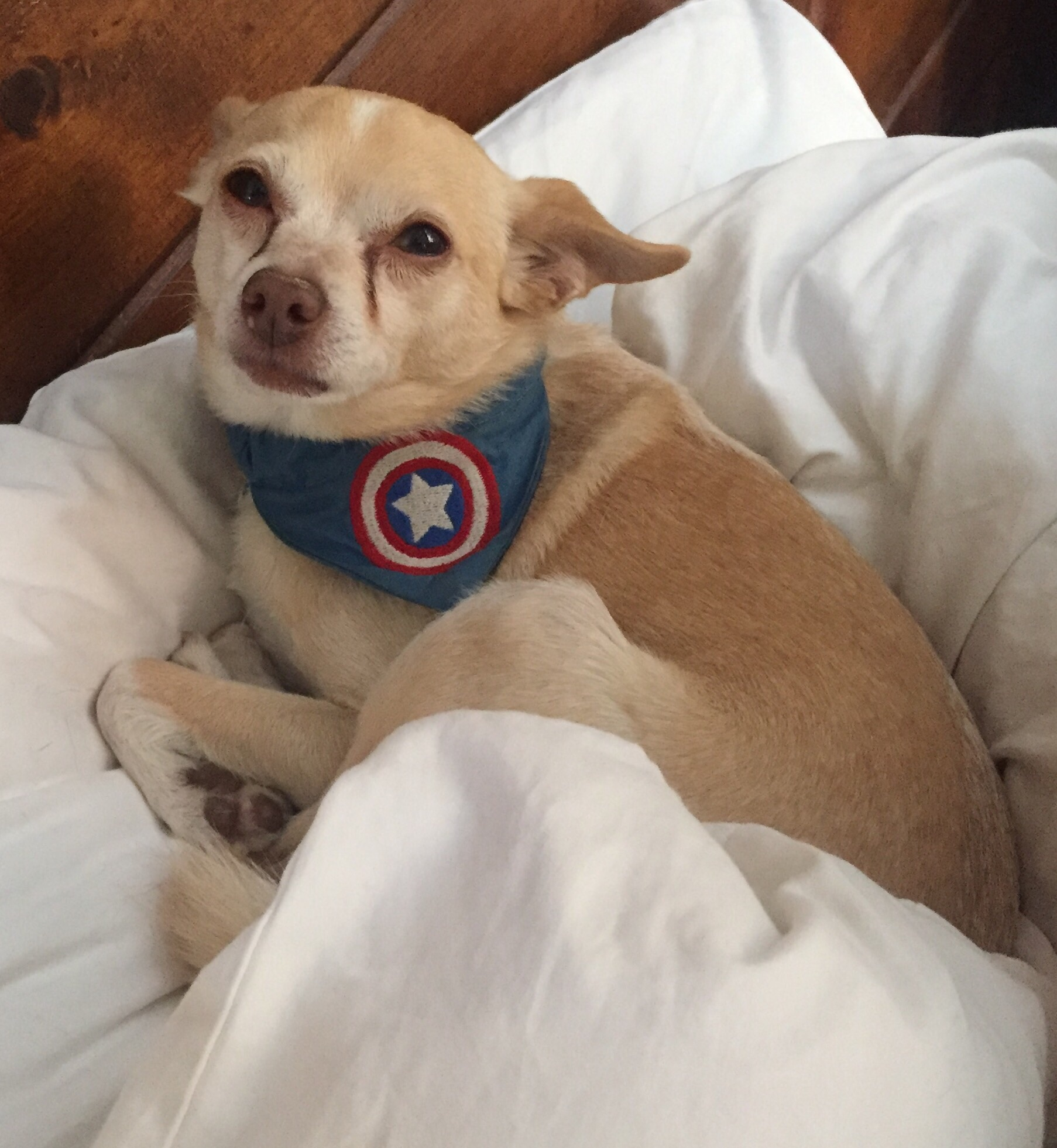 Captain America Avengers Superhero Dog And Cat Bandana