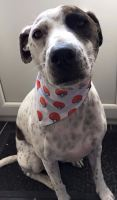 Pokemon Ball Pokemongo Repeat Print Superhero Nintendo DS Dog Bandana