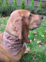 Ruby Roo Printed Basset Hound Dog Bandana