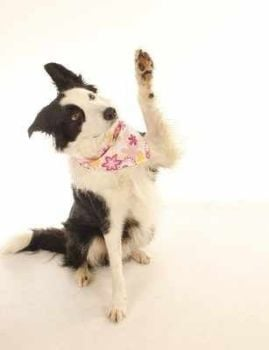 Childrens Private Pet Bandana Workshops