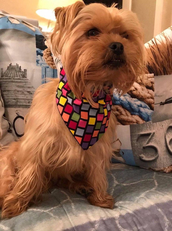 Fun At The Fair Geometric Rainbow Block Print Dog And Cat Bandana