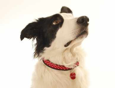 Red Polka Dog Collar B