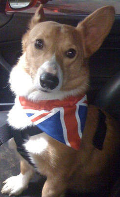 British Union Jack Olympic Jubilee Dog Bandana