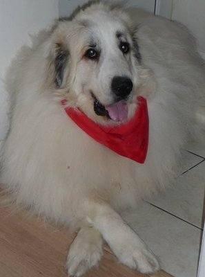 Plain Colour Dog Bandanas And Neckerchiefs