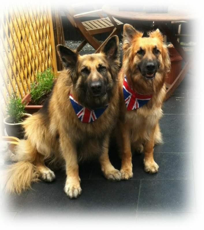 union-jack dog-bandana-a
