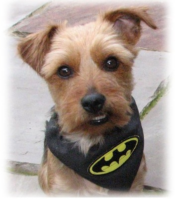 Pawed Crusader Black Batman Dog Bandana