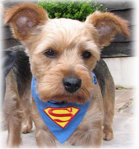 superpup-superman-dog-and-c