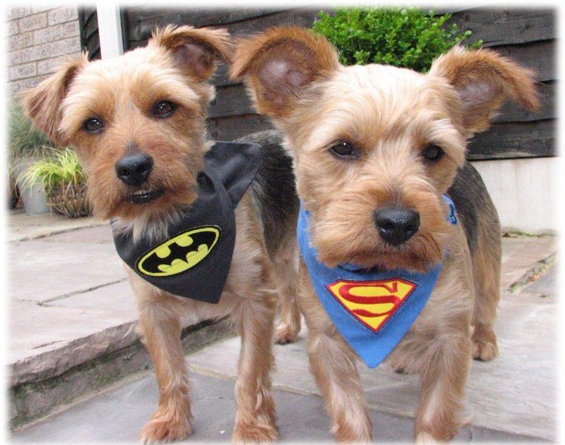 superpup-and-pawed-crusader dog and cat bandana