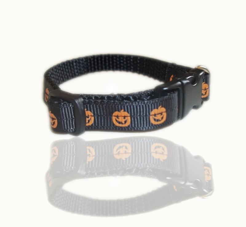 pumpkin-puppy small dog-collar-a