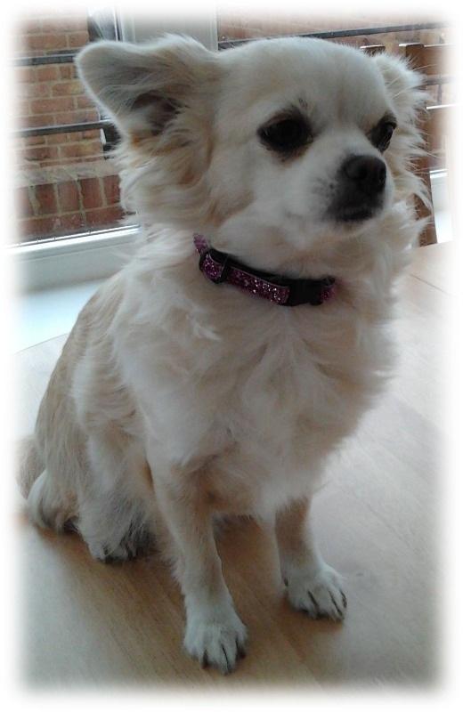 pink-munchkin glitter-dog-collar