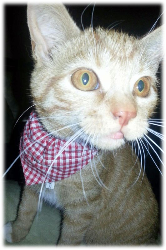 Country Lovin Red Gingham Cat Bandana Neckerchief