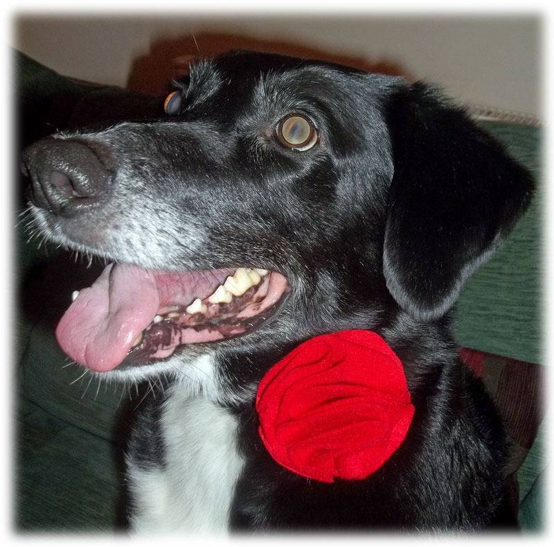 Red Dog Collar Flower