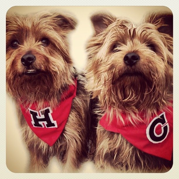 Henry And Coleman In Varsity Dog And Cat Bandanas Neckerchiefs