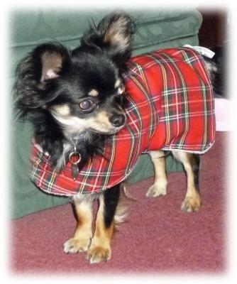 Red Tartan Royal Stewart Wool Walking Dog Coat