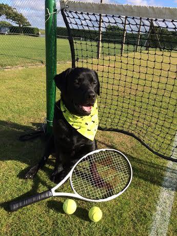 Wimbledon Tennis Bandana