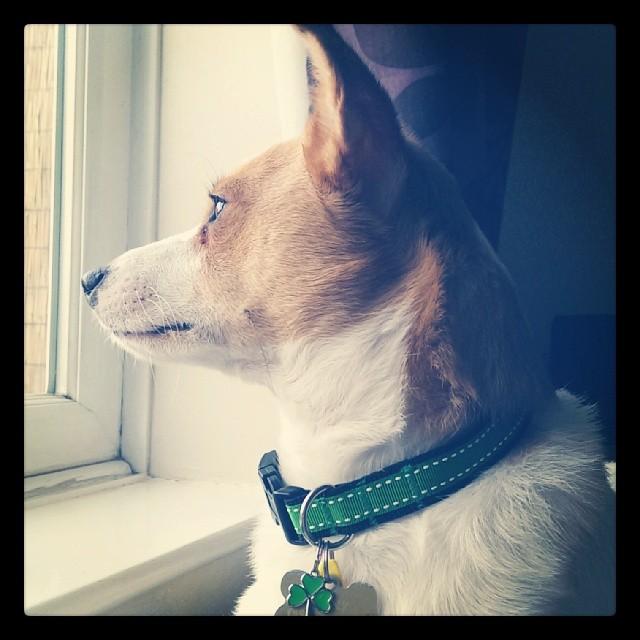 Irish Green Saddle Stitch Dog Collar