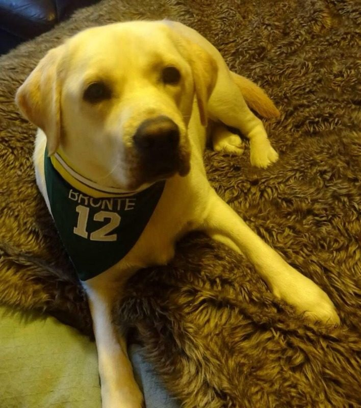 bronte all america green bay packers bandana £5.50-£15 any team personalisa