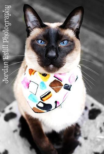 Liquorice Allsorts Sweet Treat Cat Bandana