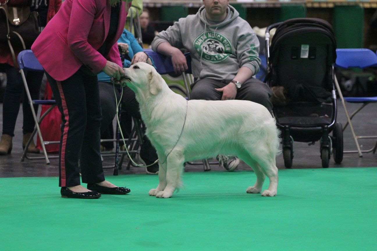 Islay at Crufts 2018