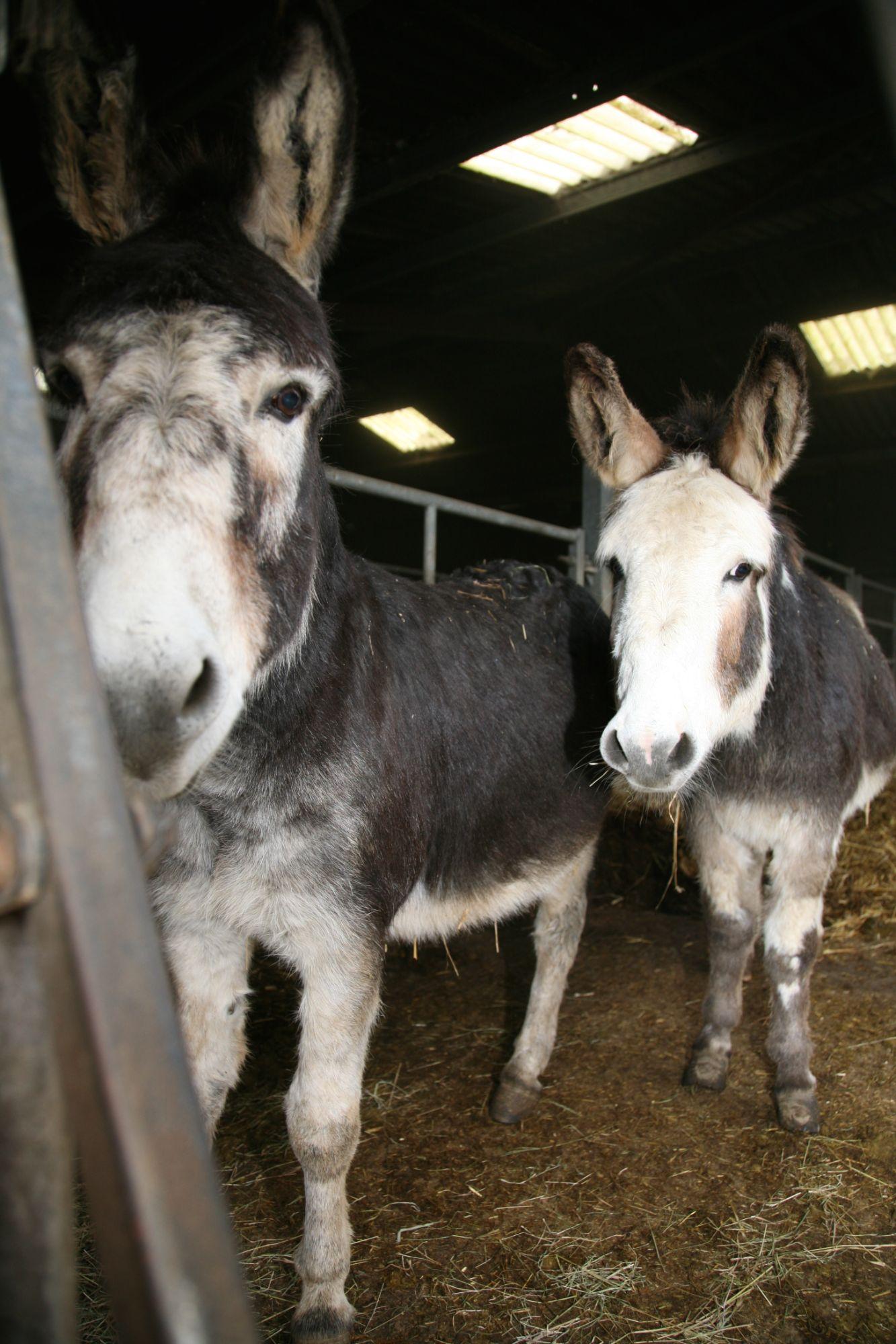 Donkey farm shop
