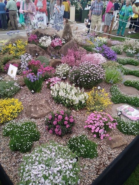 Colourful display of alpines at Chelsea flower show 2018