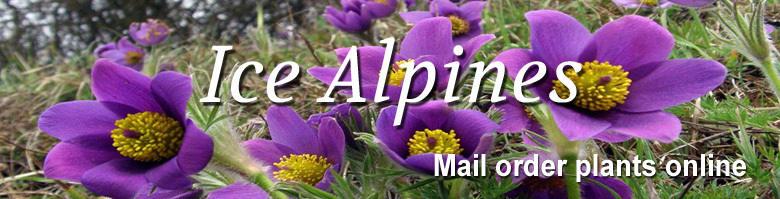Icealpines.co.uk, site logo.