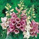 <!-- 002 -->Flower, Shrub and Tree seeds