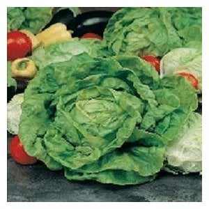 LETTUCE -  All Year Round  - 300 seeds