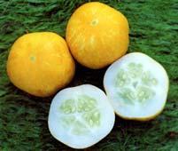 Cucumber Crystal Lemon Seeds