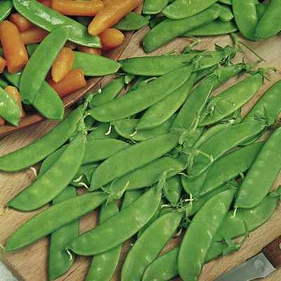 PEA - Oregon Sugar Pod - 50 SEEDS
