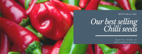 Best selling chilli seeds