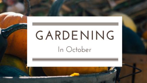 Gardening in October