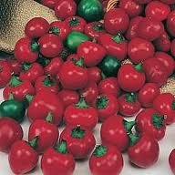 Chilli Pepper - Satans Kiss - 15 seeds