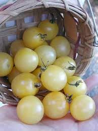 TOMATO - WHITE CHERRY - 40 SEEDS