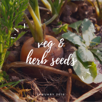 veg and herb seeds
