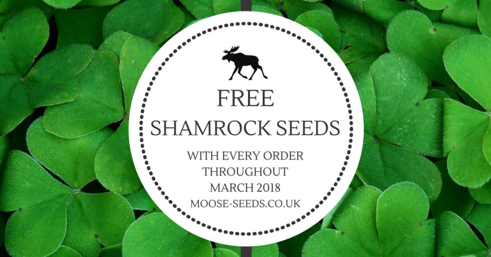 Free Shamrock seeds