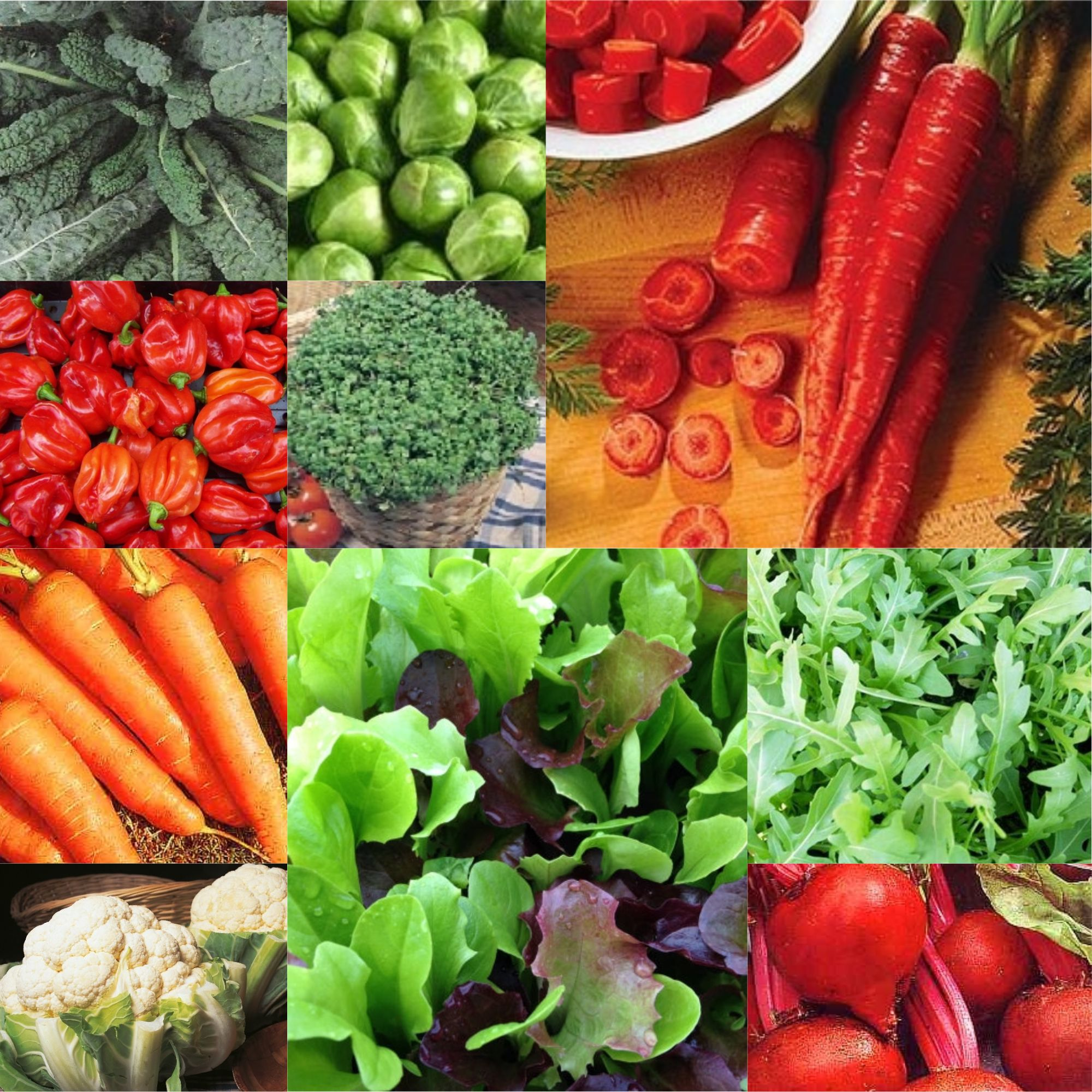 10 Packs vegetable seeds - collection