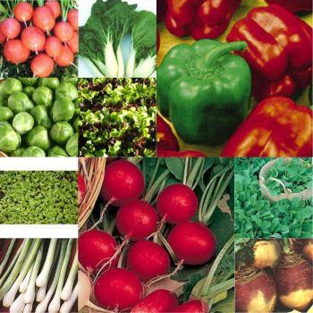 10 packs Vegetable seeds - Lettuce, Rocket, onion, carrot etc