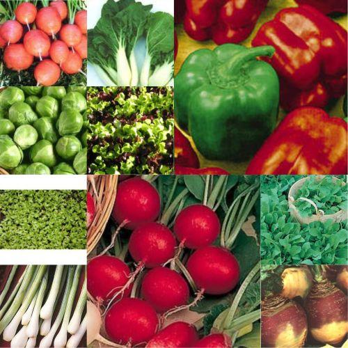 10 pks Vegetable seeds - Lettuce, Rocket, onion, carrot etc